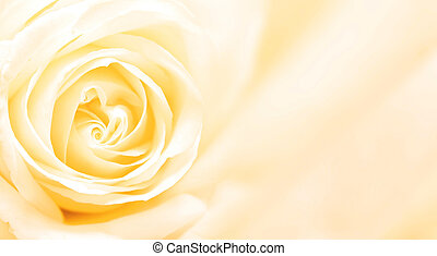 Banner with yellow rose - Background with yellow rose