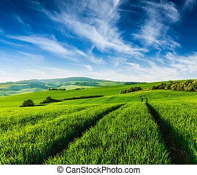 Rolling summer landscape with green grass field under blue...