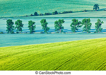Moravian rolling landscape with trees in morning - Moravian...
