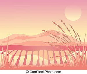 sunset paddy fields - a vector illustration in eps 10 format...
