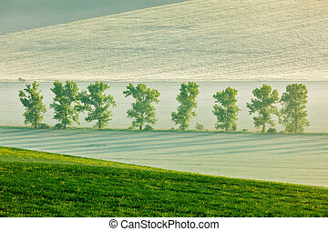 Moravian rolling landscape with trees in early morning haze...