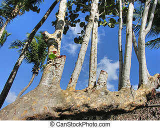 Santo Domingo, Republica Dominicana - Detail of Santo...