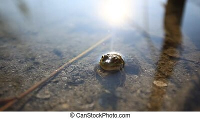 Frog in the pond - Frog in the pond in the morning HD...