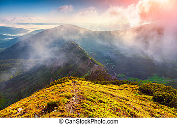 colorful summer sunrise in the foggy Carpathian mountains....