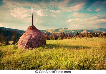 Haymaking in a Carpathian village. Ukraine, Europe. Retro...