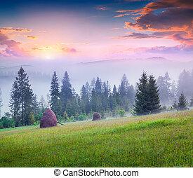 Haymaking in a foggy Carpathian village. Colorful summer...