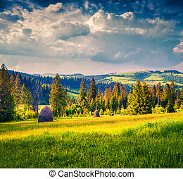 Haymaking in a Carpathian village Ukraine, Europe Retro...