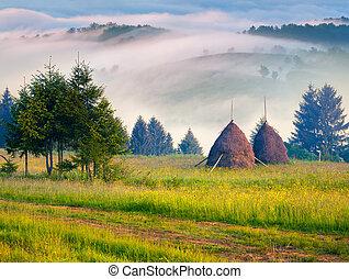 Haymaking in a Carpathian village. Ukraine, Europe. Retro...