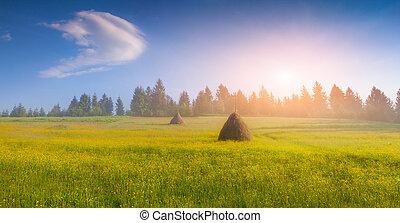 Haymaking in a Carpathian village. Ukraine, Europe.