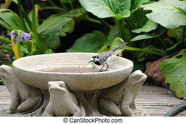White Wagtail - A white wagtail is in a clay jug with animal...
