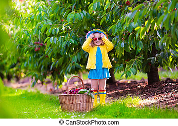 Little girl picking fresh cherry on a farm - Kids picking...