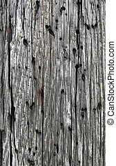 Old weathered wood with holes, natural texture background.