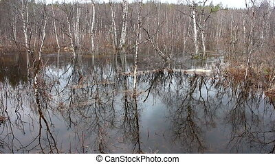 Spring flood in the forest - Flooding of the river in a...