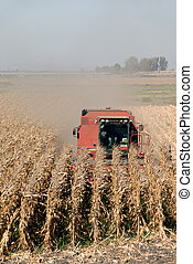 Combine and Corn - Combine Harvesting Ripe Corn