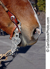 Western Bit and Bridle - Western Equestrian Bit And...