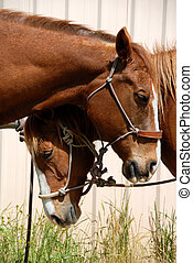 Sleepy Ranch Horses - Pair of Sleepy Ranch Horses Resting In...