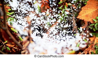 Snow on the web return of winter - Spring. Snow fell on the...