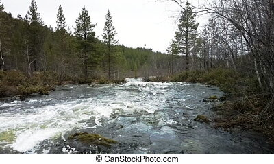 Quick taiga river on the border of Norway and Russia -...