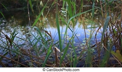 Swampy lake with mirror water level in mysterious forest....
