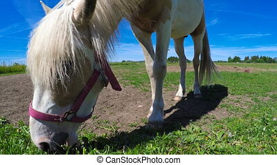 Horse eating grass on the field.