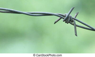 Barbed wire - On background of greenery barbed wire