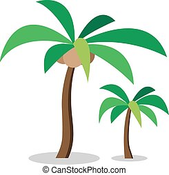Two coconut trees with coconut