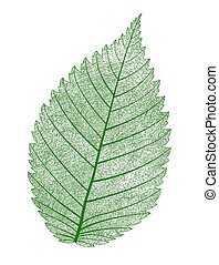Vector leaf isolated. - Vector macro realistic leaf...