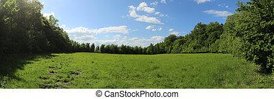 Meadow In The Woods - Meadow in a beech forest in...
