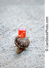 Chance in coming slow. Picture of a red dice on a snail...