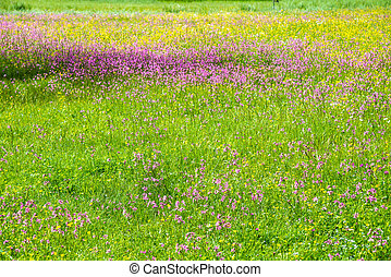 flowery meadow - a flowery meadow in the high mountains