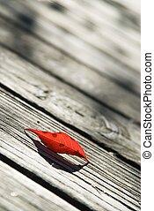 Single red birch leaf on a boardwalk