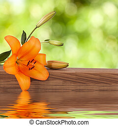 natural flower with reflection in water