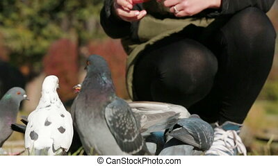 Girl Feeding Pigeons With Bread - Shot of a young girl...