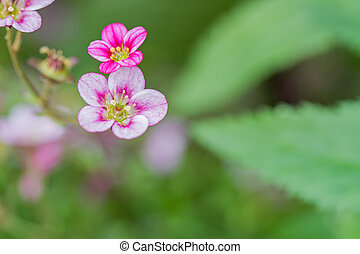 small courtyard flowers - macro garden plants photographed...
