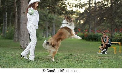 Coach coaches collie dog - Young woman playing with border...