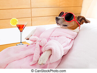 dog spa wellness - jack russell dog relaxing and lying, in...
