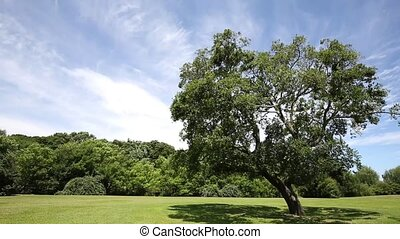 green grass field and tree - public park with green grass...