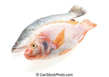 Fresh fish - Raw fresh fish isolated on white background