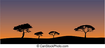 Savannas landscape in evening - Silhouettes of savanna trees...