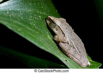 tree frog sleeping