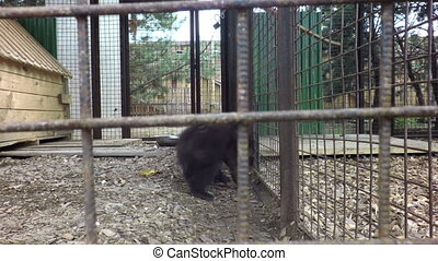 Small brown teddy bear in cage - Small brown teddy bear in a...