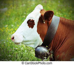 vaca, pasto, en, el, pradera, en, el, montañas,