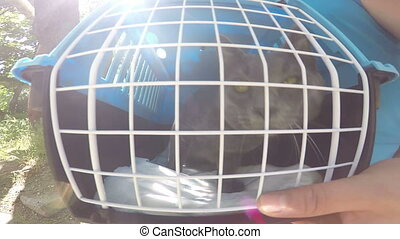 Carriage of gray cat into pet cage carrier by car PoV