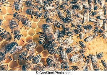 abelha, enxame,