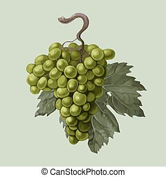 Cluster of grapes with a leaf