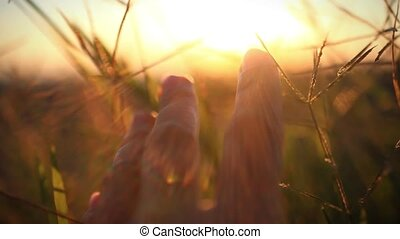 Woman's hand touch wheat ears at sunset. Blurred beautiful...
