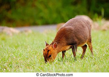 wild deer animal - Wild deer of wildlife animal beyond the...