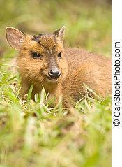 Wild deer portrait - Wild deer of wildlife animal portrait,...