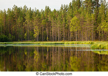 Serene sunny morning forest reflection in finland
