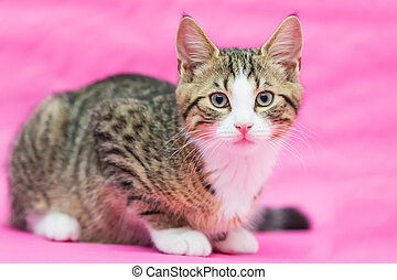 beauty kitten - sweet little tiger tomcat sitting against a...